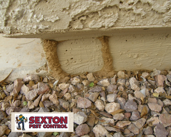 Sexton Termite Property Inspection