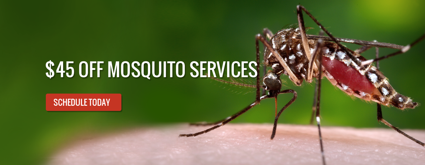Off Mosquito Services